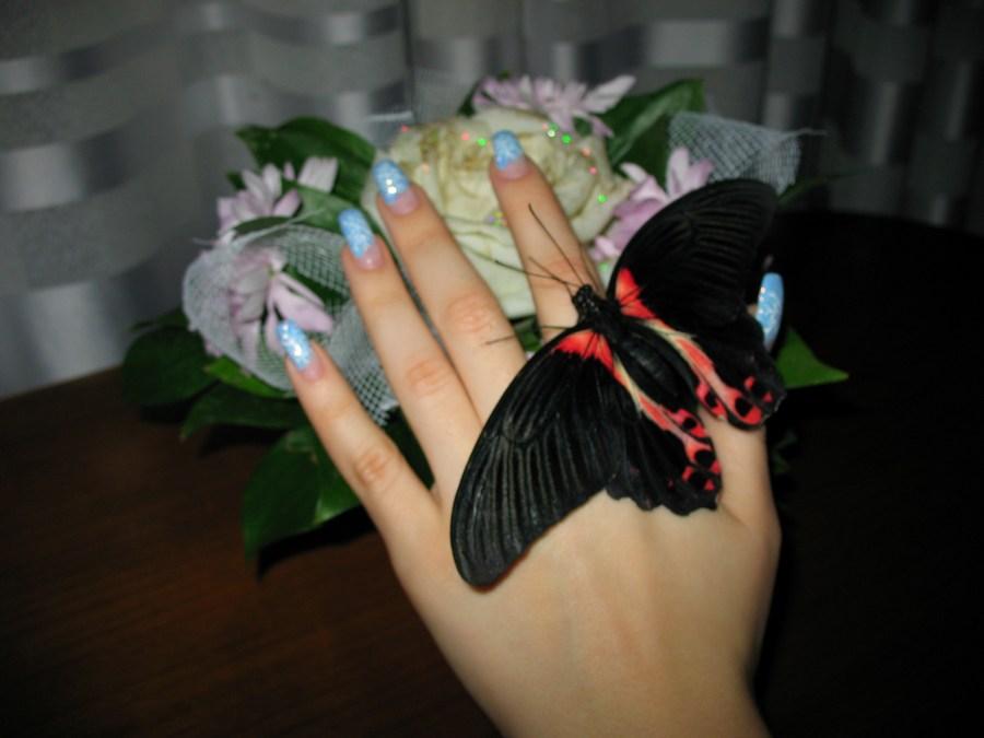 Бабочки в коробке подарок цена волгоград 58